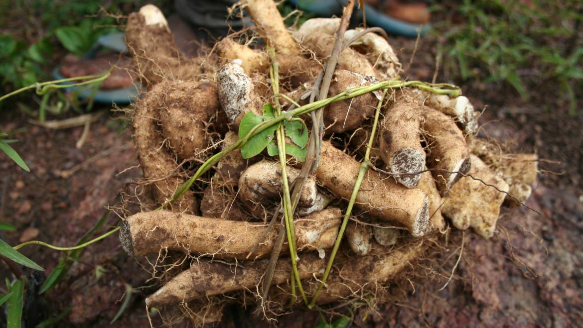 Alternative HRT Claims: Wild Yam